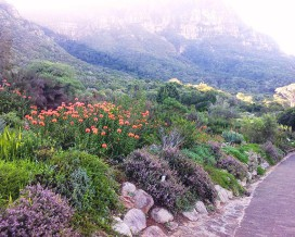 The Smell of Fynbos in the Morning