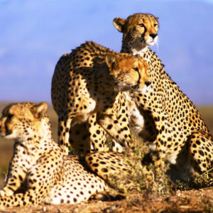 Cape Town Full Day Safari Tour