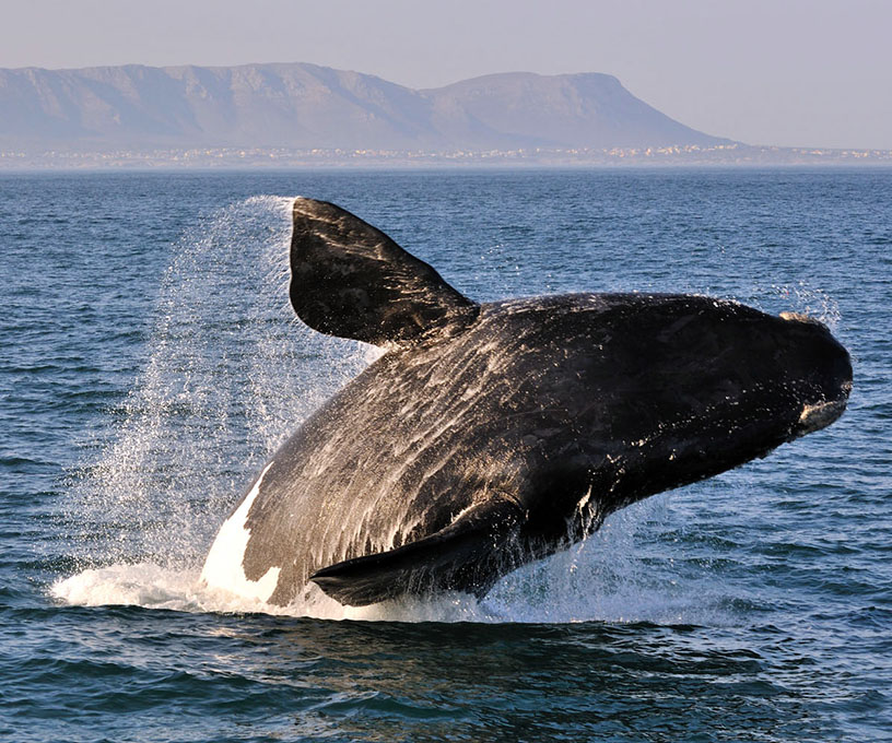 Sightseeing Cape Town Whale Watching Tours